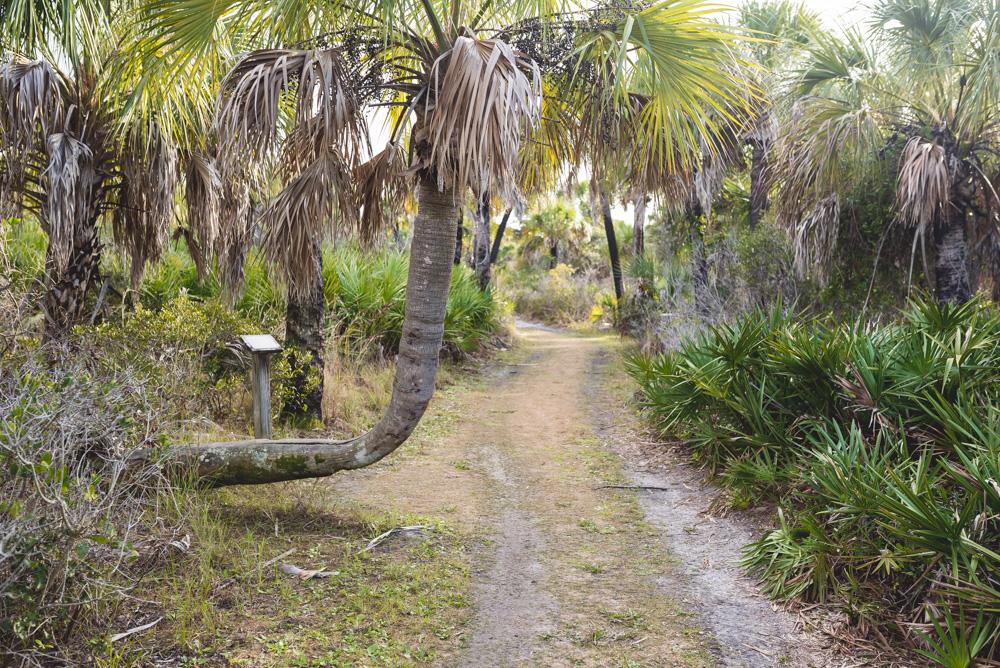 krzywa palma caladesi island