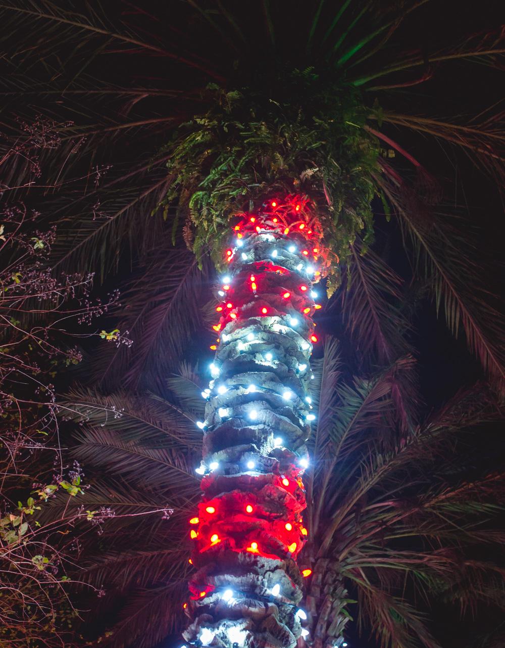 palma swiatelka