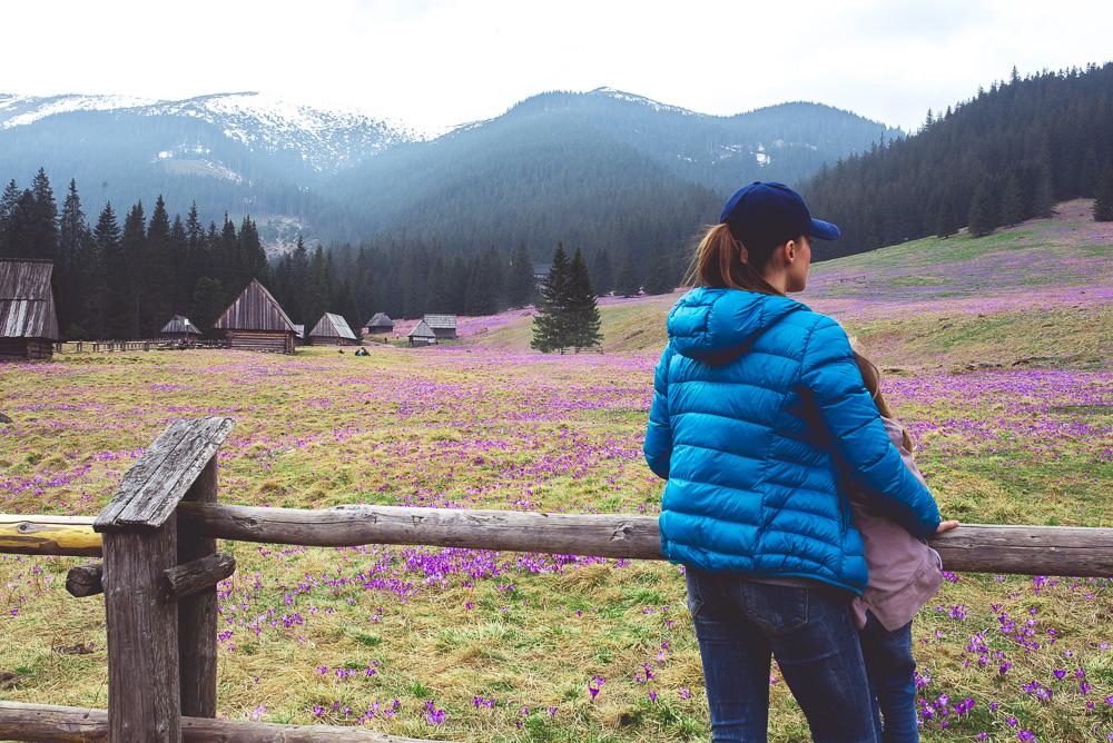kiedy kwitną krokusy w dolinie chochołowskiej
