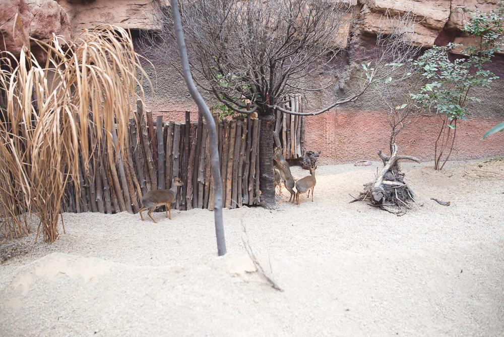 wroclaw afrykarium zoo