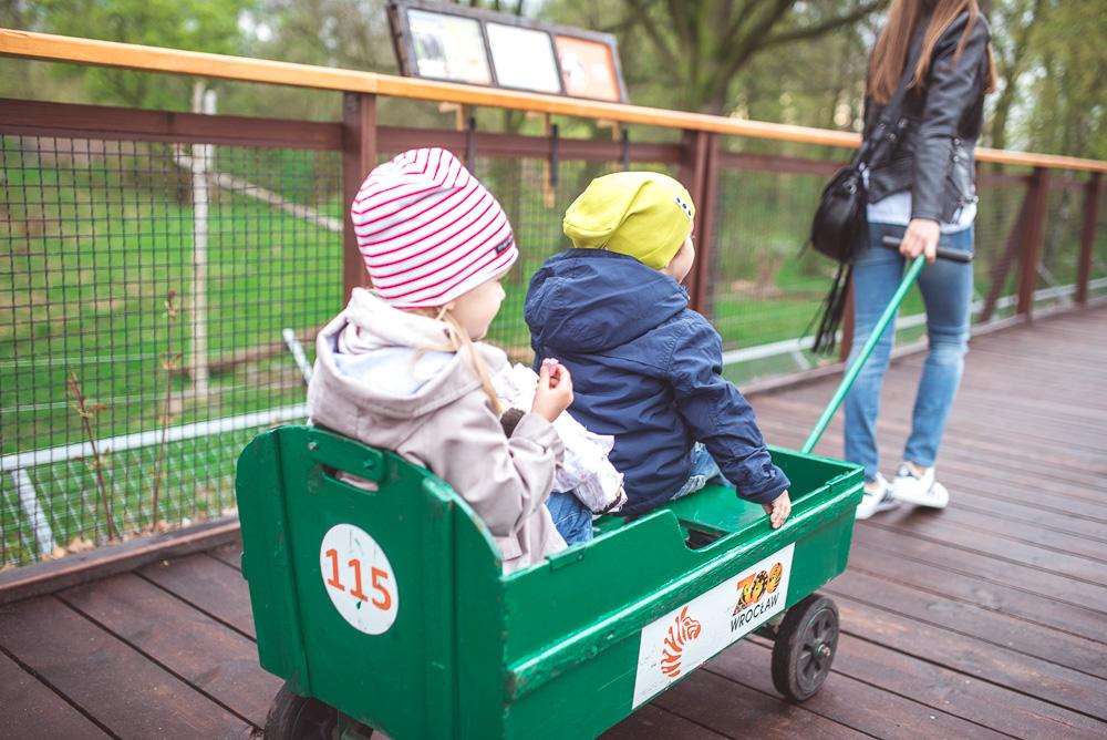 wroclawskie zoo