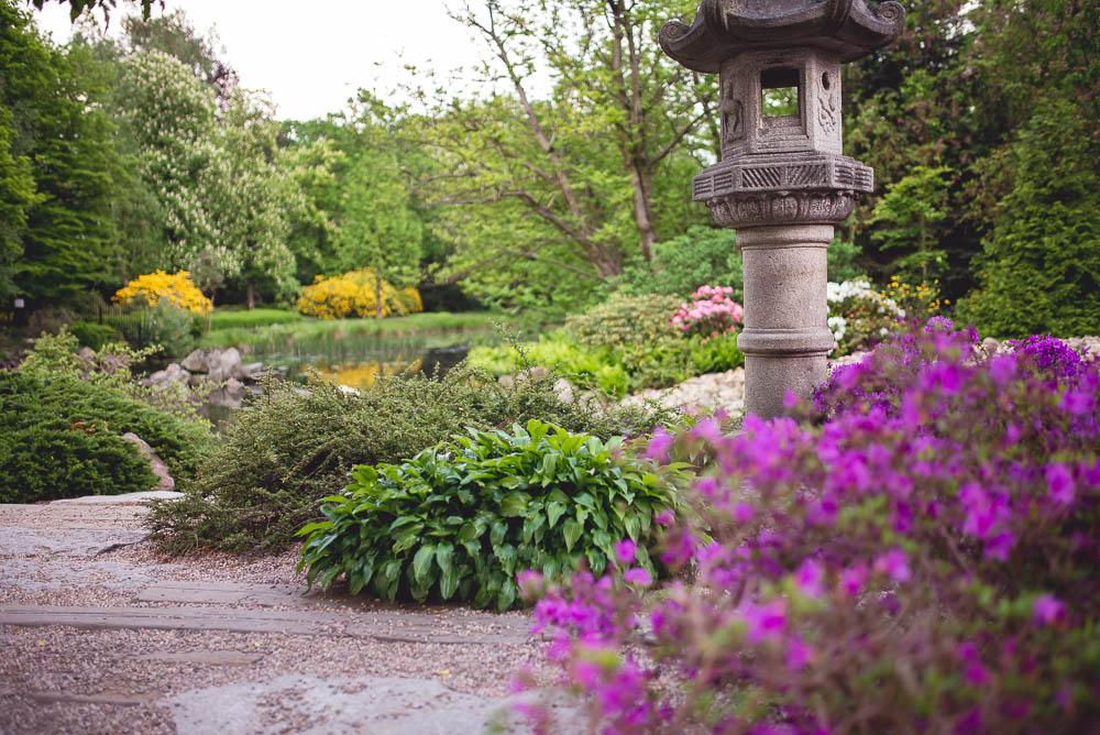 piekny ogrod japonski we wroclawiu
