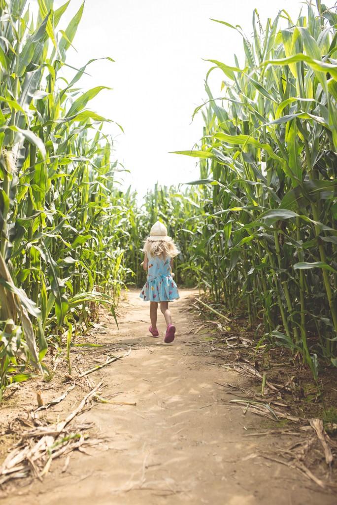labiryny w kukurydzy wladyslawowo