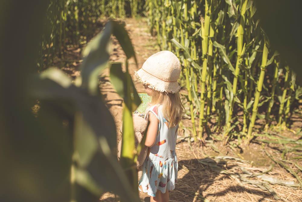 labiryny w polu kukurydzy wladyslawowo