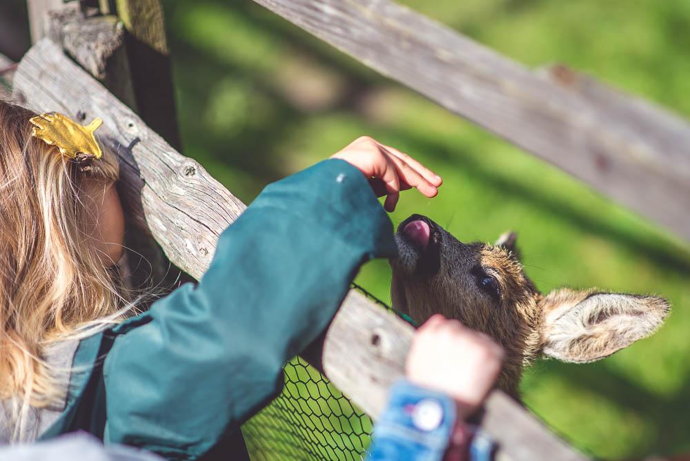 czy warto jechac do parku dzikich zwierzat