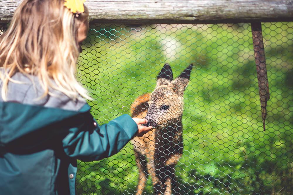 park dzikich zwierzat czy warto