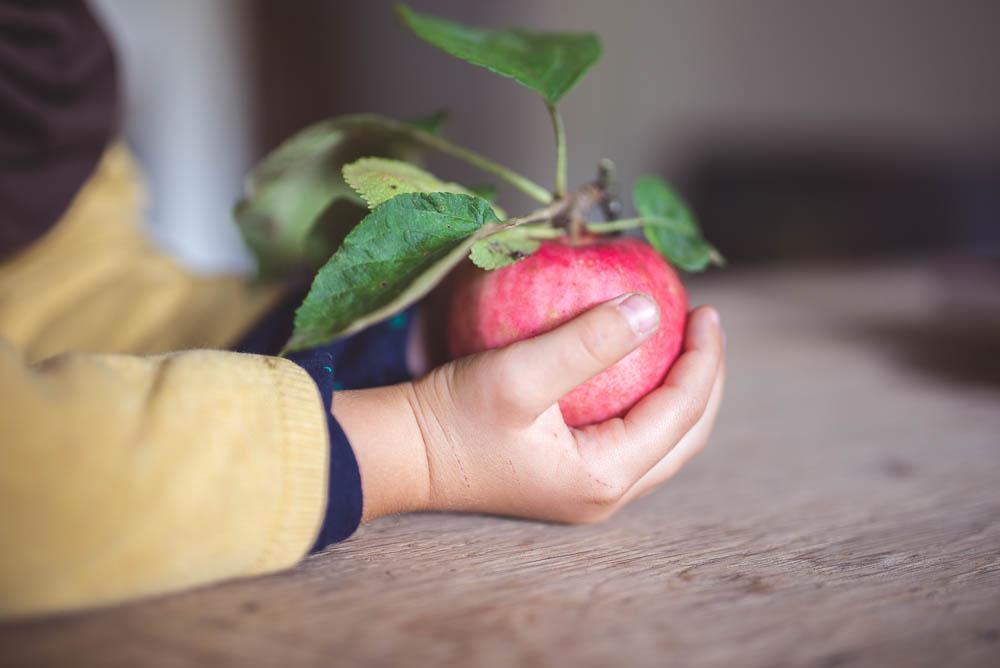 jablko prosto z drzewa