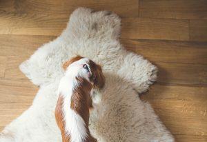hotel przyjazny psom zakopane