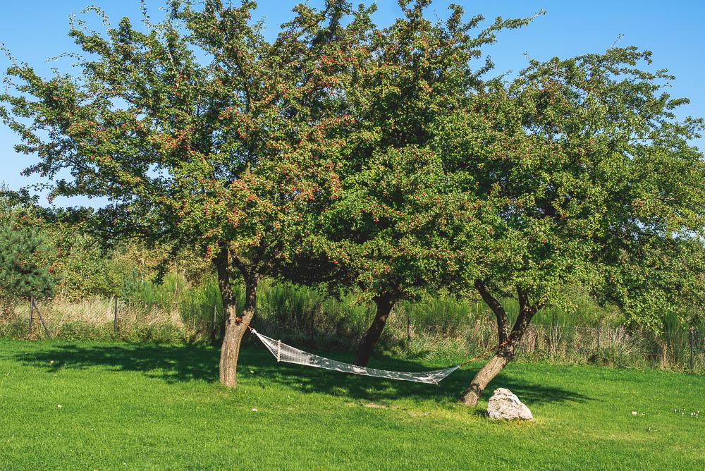 hamak na drzewie