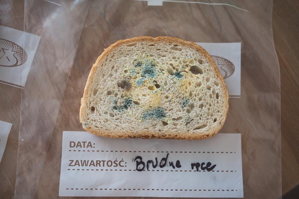 eksperyment plesn na chlebie