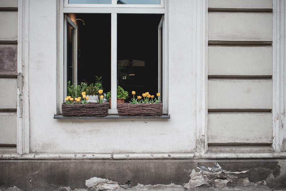 tulipany w oknie