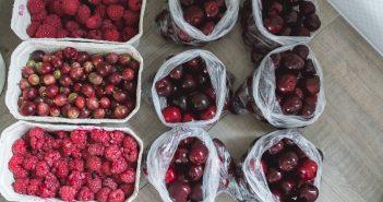 mrozenie warzyw owocow