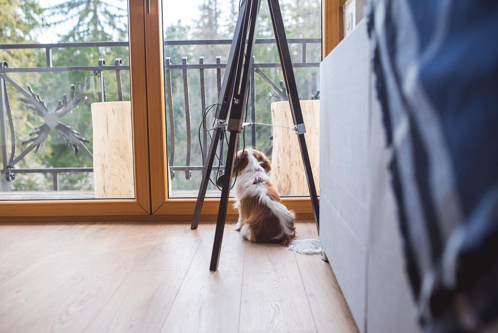 cavalier sam w domu